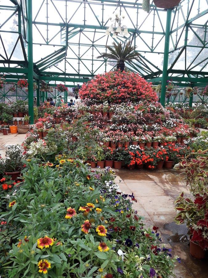 乌塔卡蒙德植物园& x28;nilagiri district& x29;泰米尔・那杜 免版税库存图片
