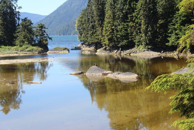乌山头水库熊观测所的盐水湖在Wrangell阿拉斯加附近的夏天 库存照片