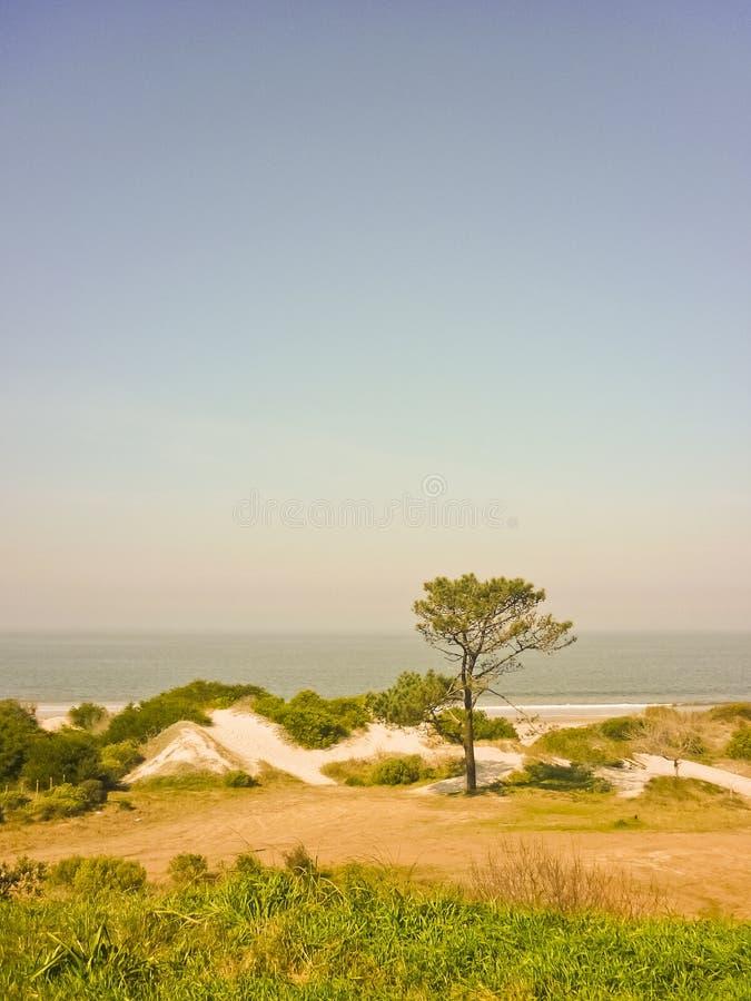 乌拉圭的海岸的风景视图 库存照片