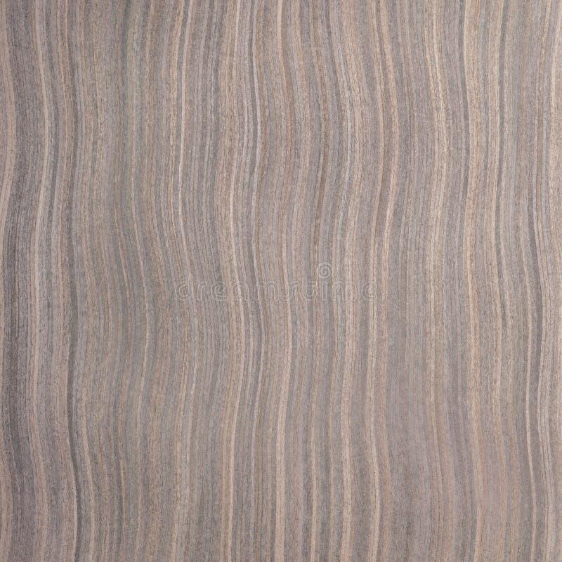 乌木木头纹理 库存照片