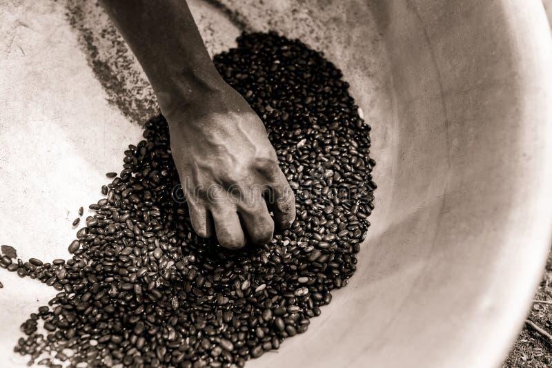 乌贼属接近拿着在罐的皮包骨头的非洲妇女手黑豆,当工作在农场在乡下时 免版税图库摄影