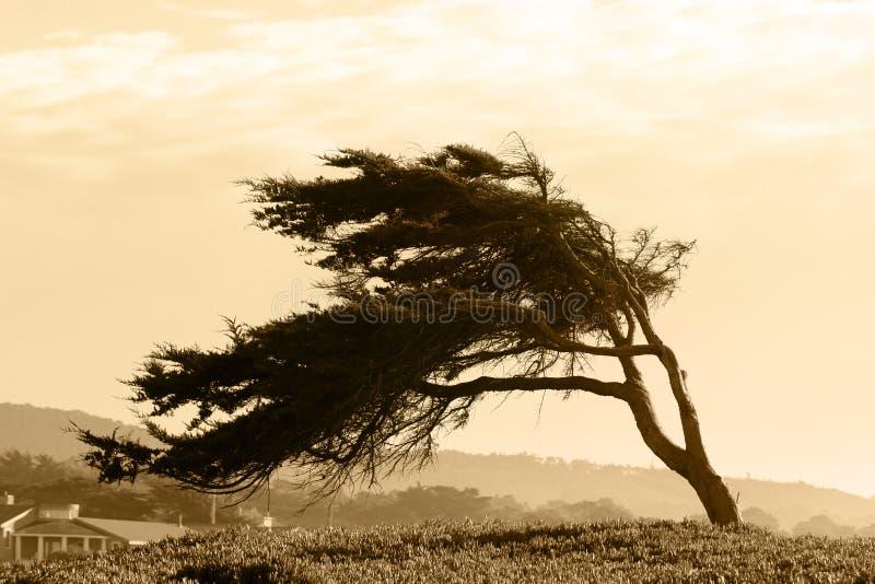 乌贼属结构树 库存图片