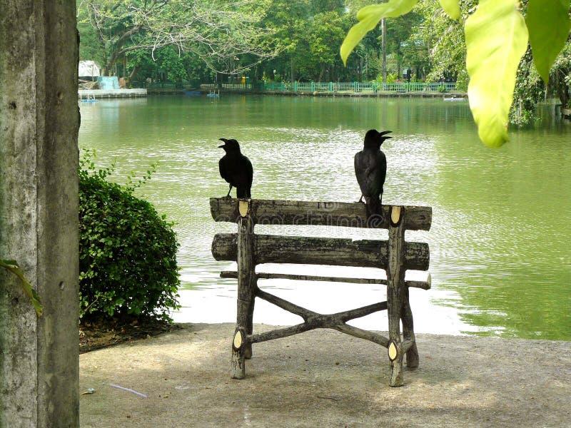 乌鸦夫妇在长凳日志的  免版税库存照片