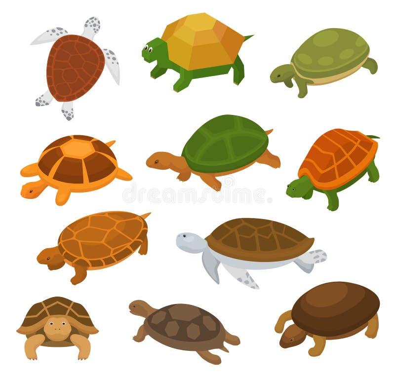 乌龟传染媒介动画片游泳在海和草龟的seaturtle字符在龟甲例证套爬行动物 向量例证
