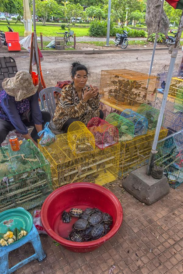 乌龟和鸟在笼子在寺庙附近 卖任意设置和 免版税库存照片