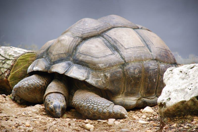 乌龟在动物园里 库存照片