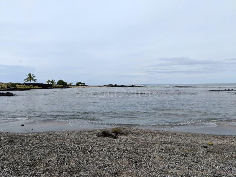 乌龟基于海滩在Aiopio鱼陷井 免版税库存图片