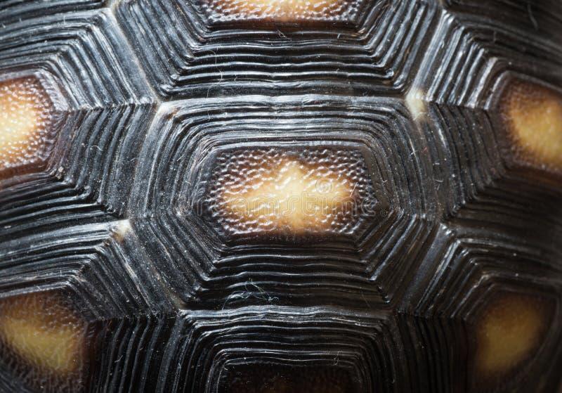 乌龟壳样式纹理 免版税库存照片