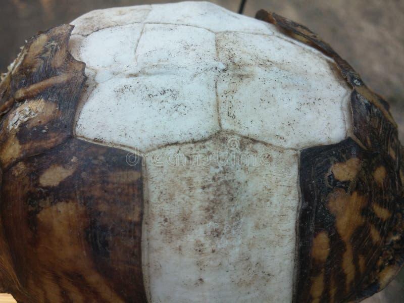 乌龟壳 库存照片
