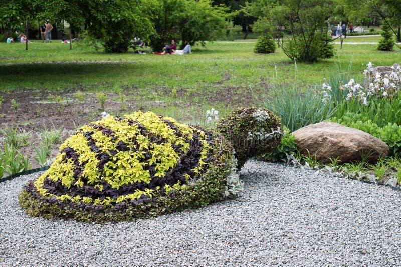 乌龟形状的灌木在修剪的花园庭院里 装饰公园庭院设计 库存照片