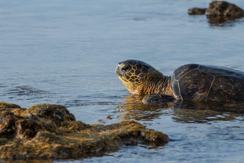 乌龟日落 库存照片