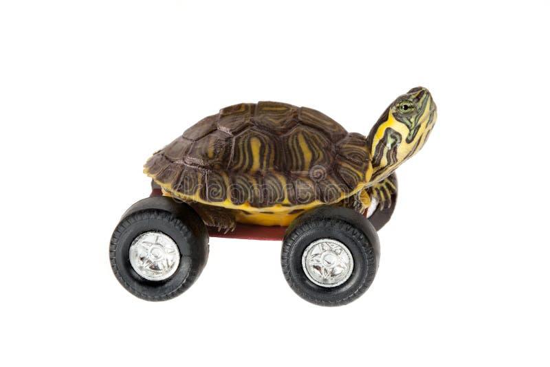 乌龟轮子 免版税库存照片