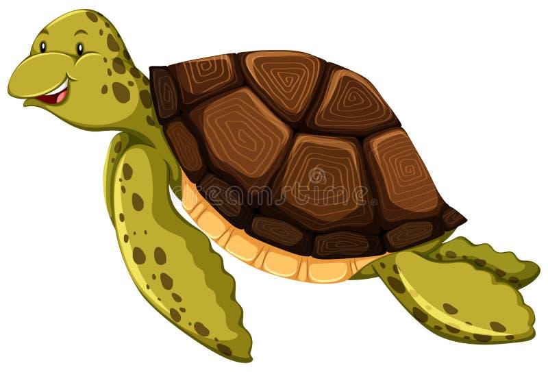 乌龟 库存例证
