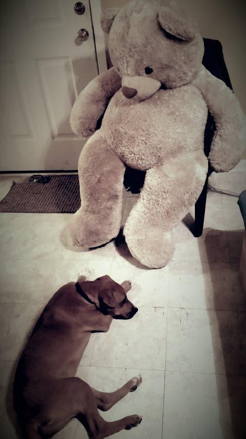乏味狗和熊 库存图片