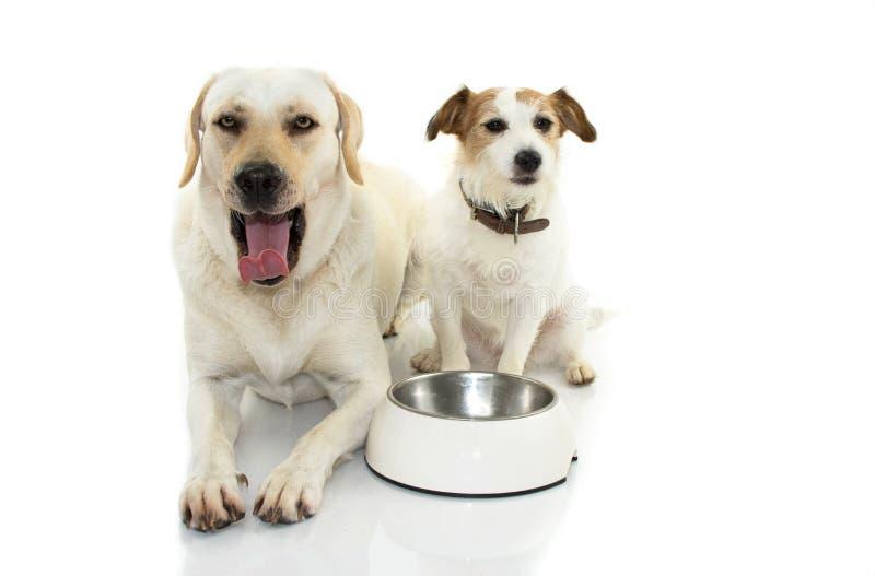 乏味狗食 两小狗、拉布拉多和杰克有EM的罗素 免版税库存照片