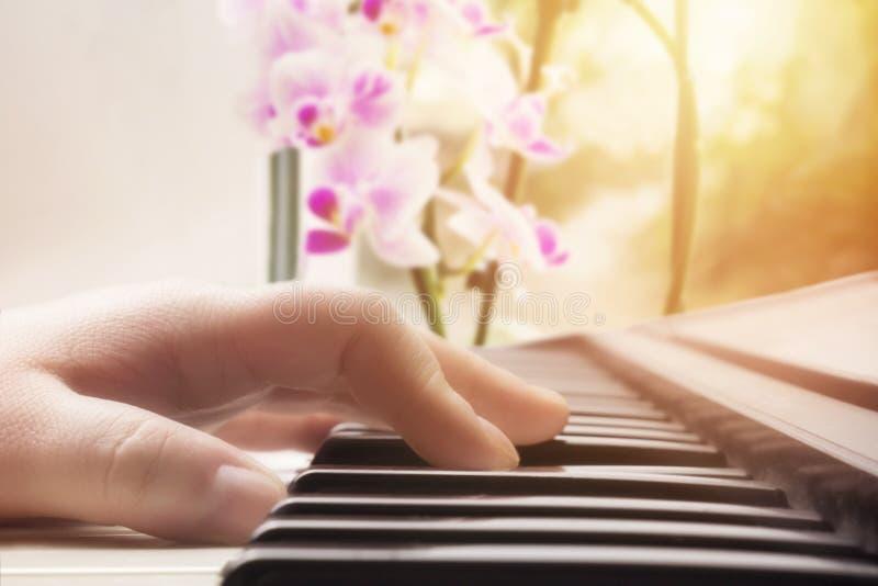 乐器和兰花 温暖的颜色定了调子弹钢琴的白种人妇女音乐执行者手的照片 锁上老钢琴 库存照片