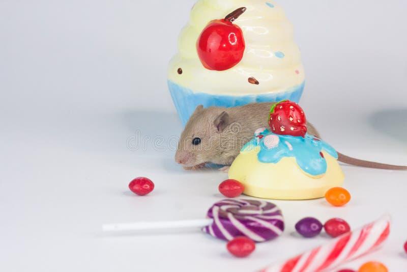 乐趣的概念 在明亮的背景的鼠与甜点 库存照片