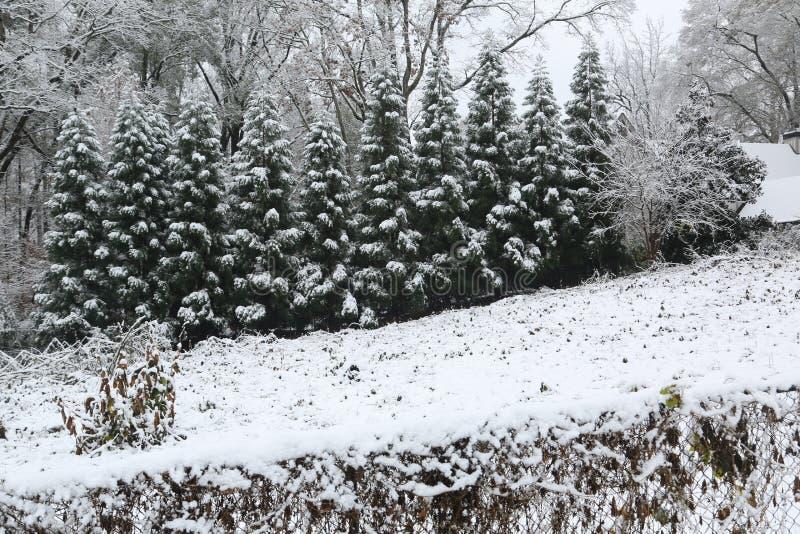 乔治亚在雪s报道的树` 免版税库存照片