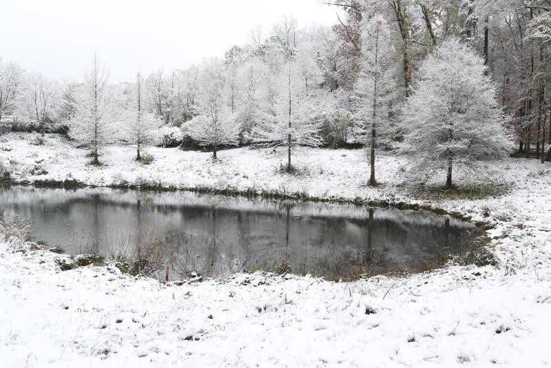 乔治亚在雪s报道的树` 库存图片
