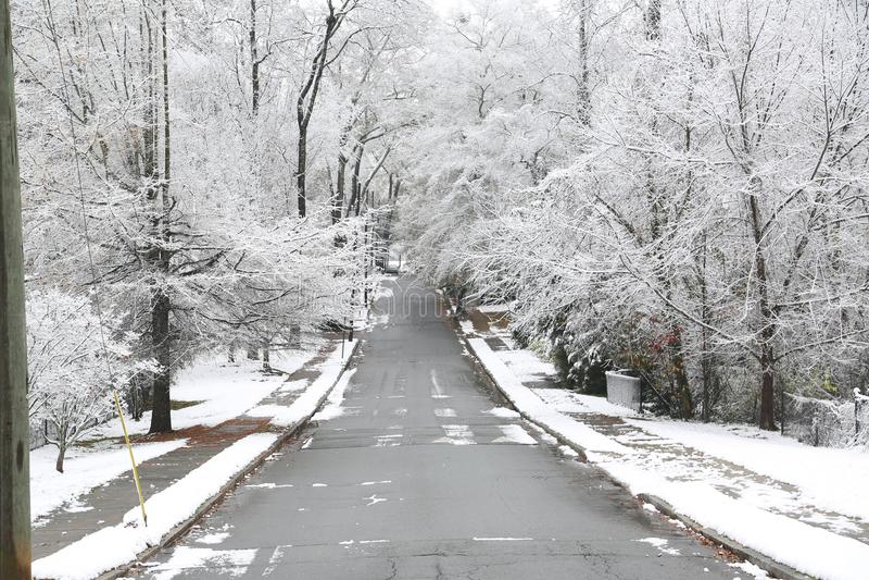 乔治亚在雪s报道的树` 免版税库存图片