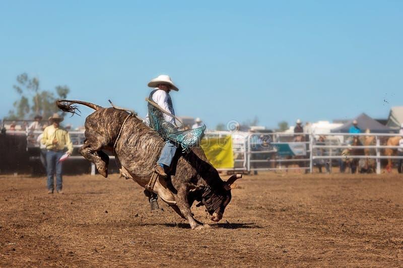 乘坐公牛的牛仔在圈地 库存图片