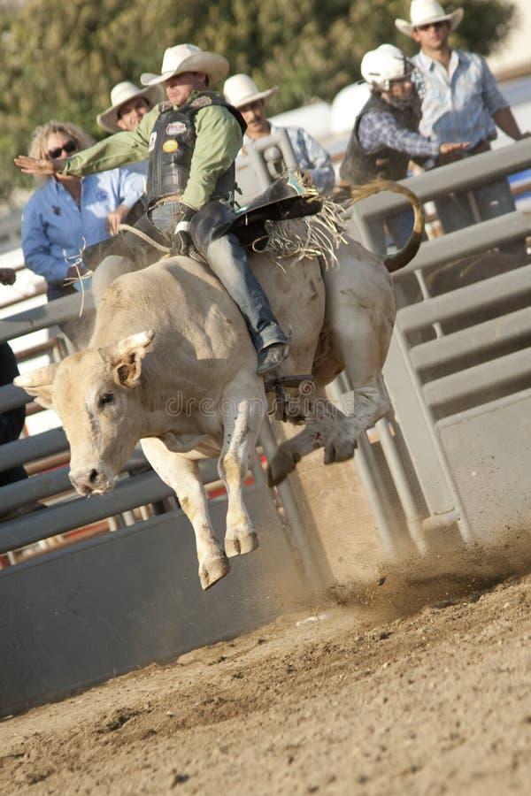 乘坐圣的公牛dimas 免版税库存图片
