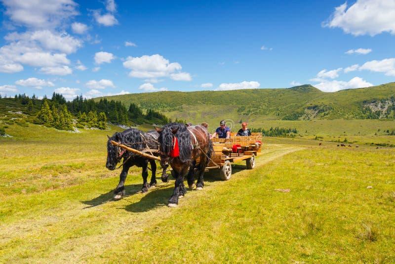 乘坐在Rodna山的小组游人一个马推车,罗马尼亚 免版税库存图片