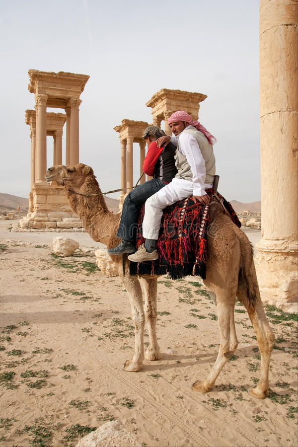 乘坐骆驼的流浪的男孩在扇叶树头榈-叙利亚古城 库存图片