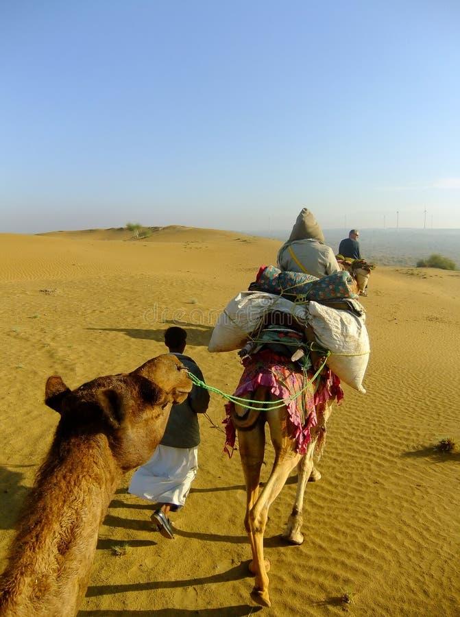 乘坐骆驼的游人在塔尔沙漠在骆驼徒步旅行队期间在拉杰 免版税库存图片