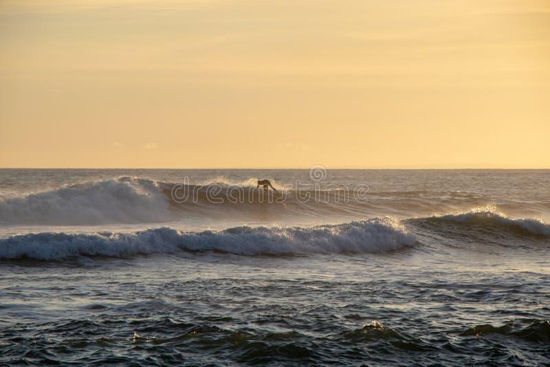 乘波浪的冲浪者在日落在回声海滩Canggu巴厘岛Indones 库存照片