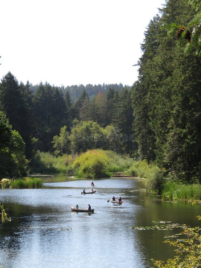 乘独木舟在风的湖的小组 库存图片