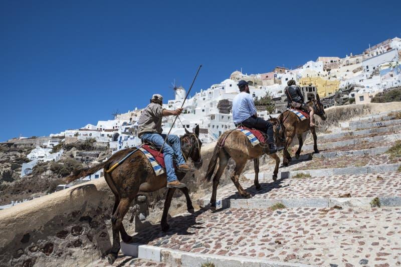驴乘驾在圣托里尼 免版税库存照片