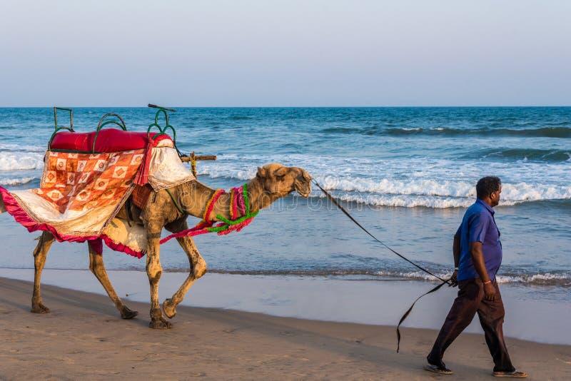 乘驾的骆驼在海滩 免版税库存照片