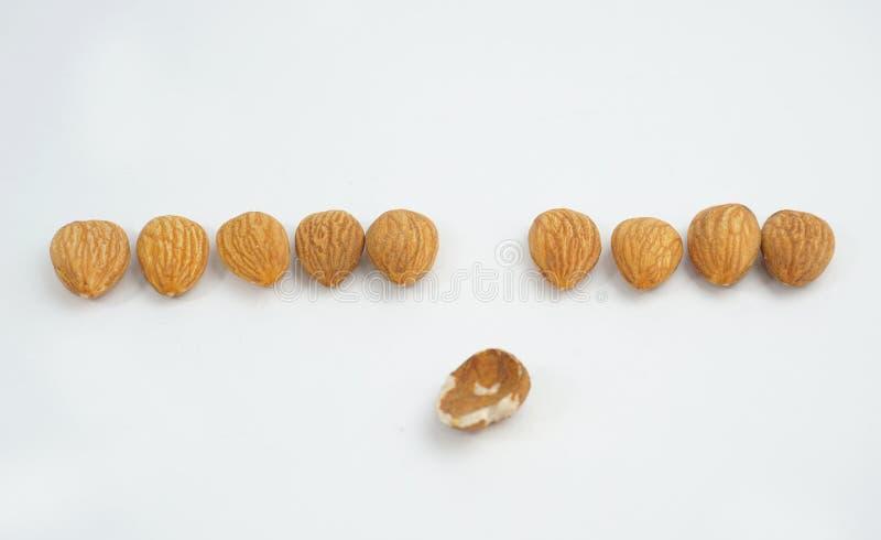 九个在线的好杏仁坚果和在白色背景的一个坏杏仁 库存照片