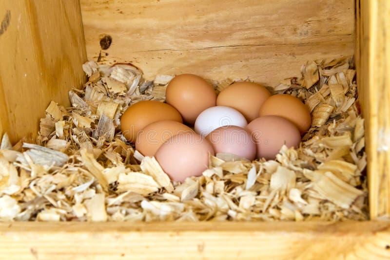 九个鸡鸡蛋 免版税图库摄影