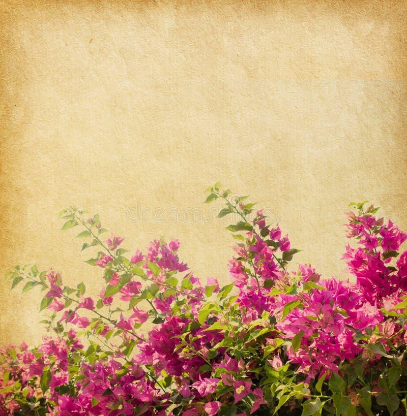九重葛黑暗的粉红色 免版税库存照片