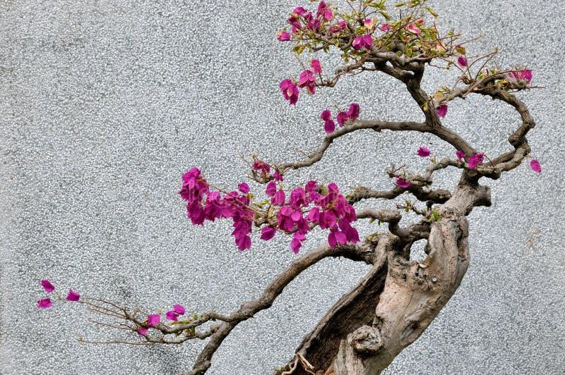 九重葛Bonsail结构树