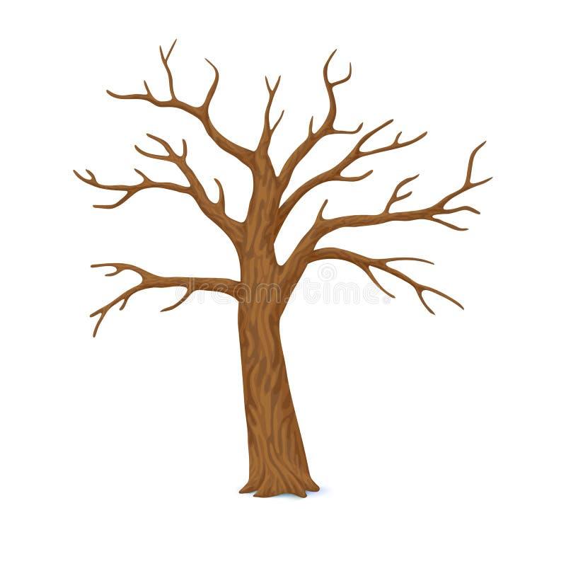 也corel凹道例证向量 冬天,晚秋天象 与在白色背景隔绝的空的分支的唯一光秃,不生叶的树 皇族释放例证