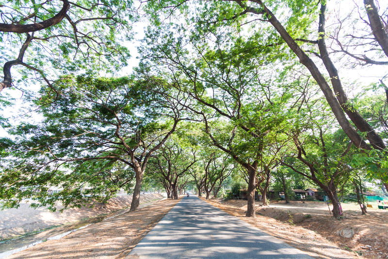 Download 有树的乡下路 库存照片. 图片 包括有 森林, 叶子, 场面, 颜色, 高速公路, 街道, 旅行, 木头 - 30328582