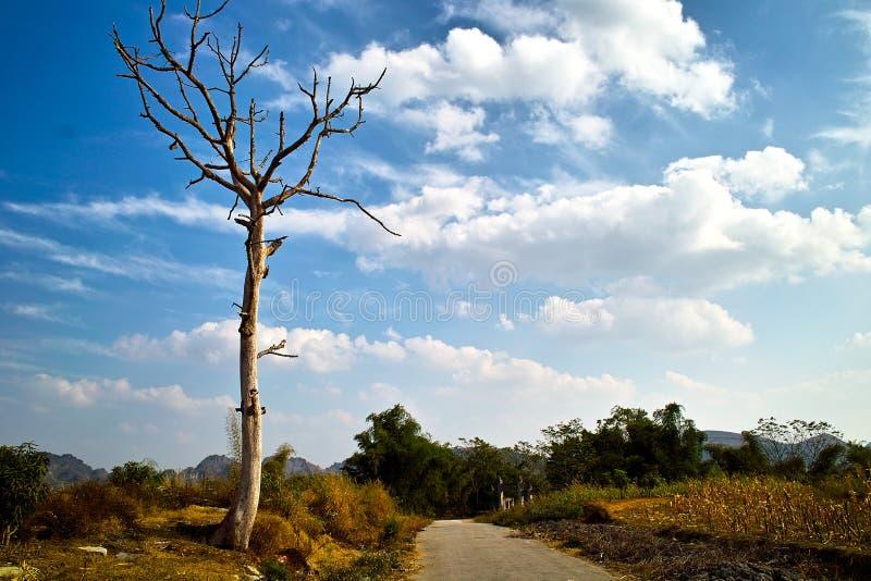 乡下停止的结构树 库存照片