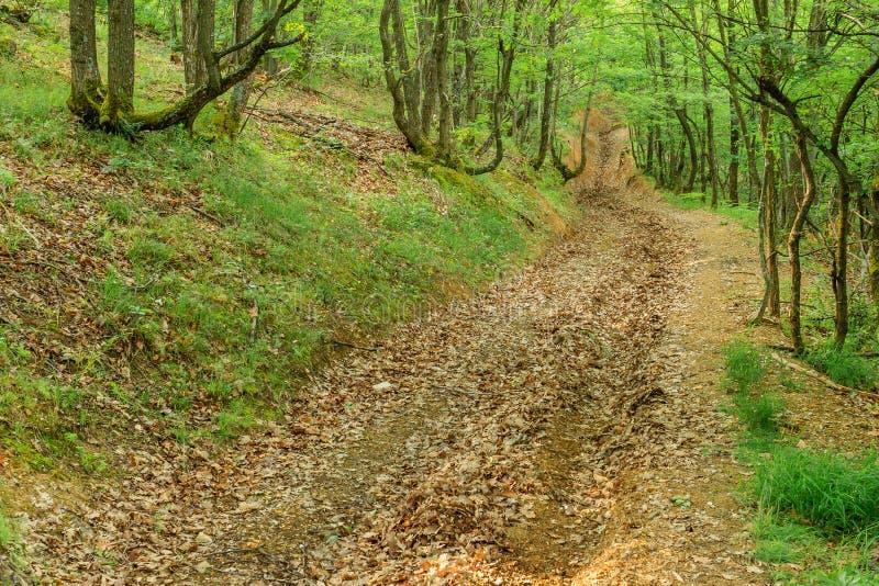 乡下公路低谷绿色森林 库存图片