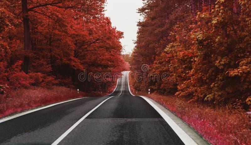 乡下公路充分边方式与红色叶子的树在秋天 免版税库存照片