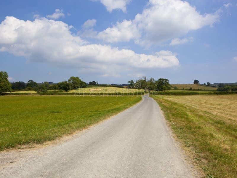 乡下公路和三叶草领域在一个补缀品夏天环境美化 免版税图库摄影