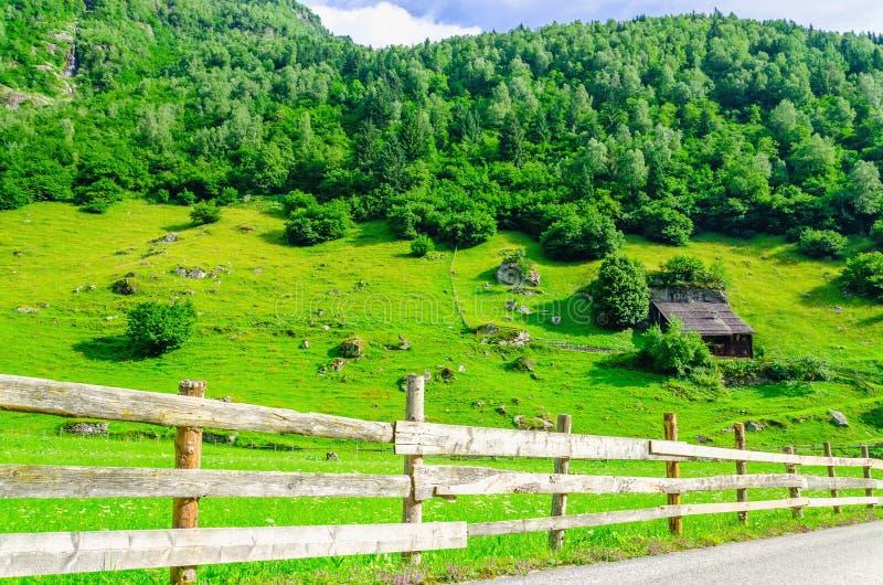 乡下公路和绿色高山草甸在奥地利 库存照片