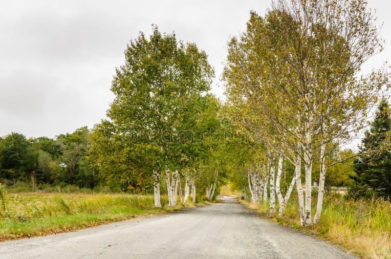乡下公路在一秋天阴云密布天 免版税库存照片