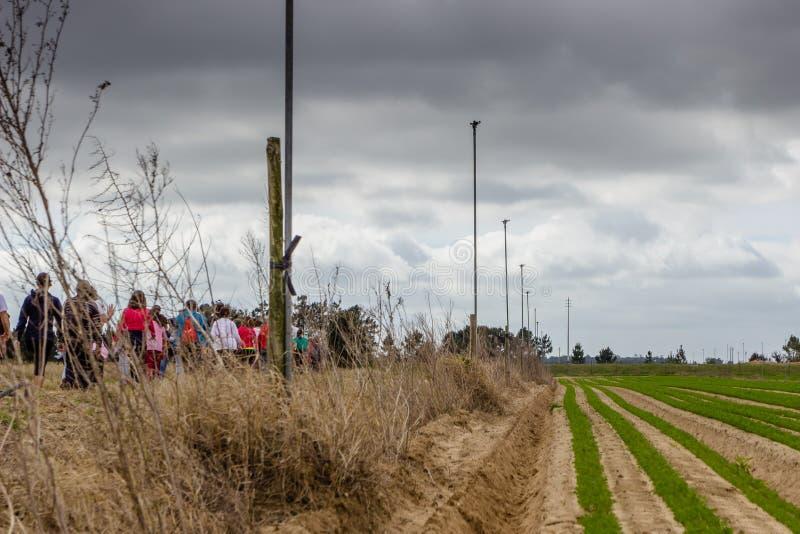 乡下公路在有植被的葡萄牙在双方 22个项目符号口径组白色 免版税图库摄影
