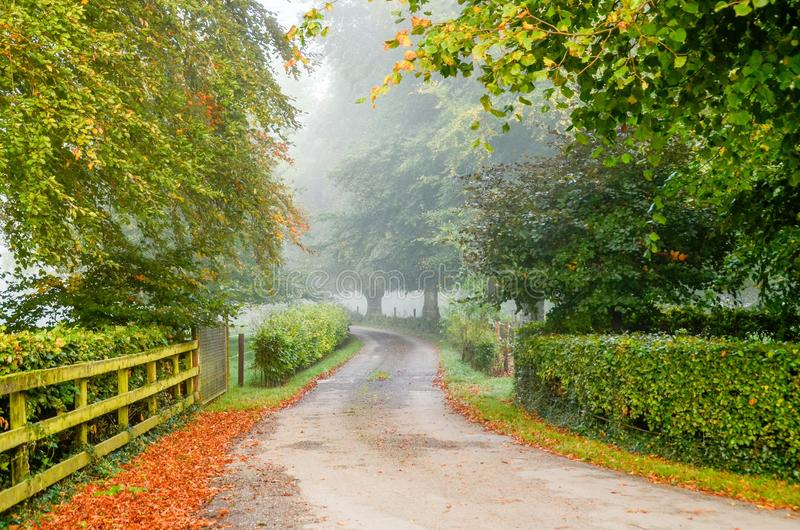 乡下公路爱尔兰 库存照片