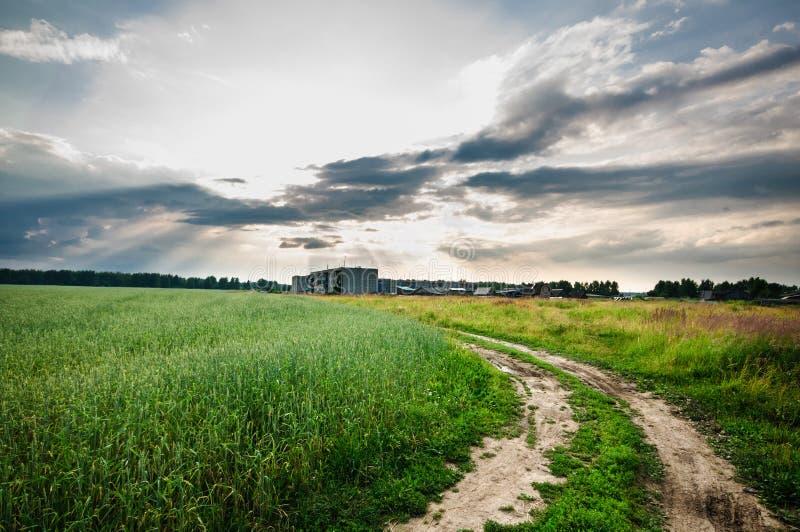 乡下公路通过绿草的领域 免版税库存图片