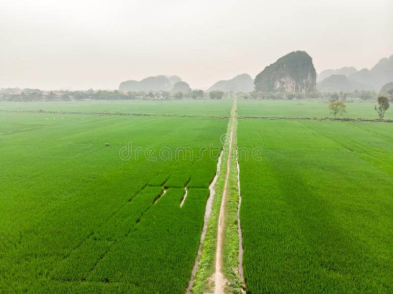 乡下公路鸟瞰图通过绿色米领域 库存照片
