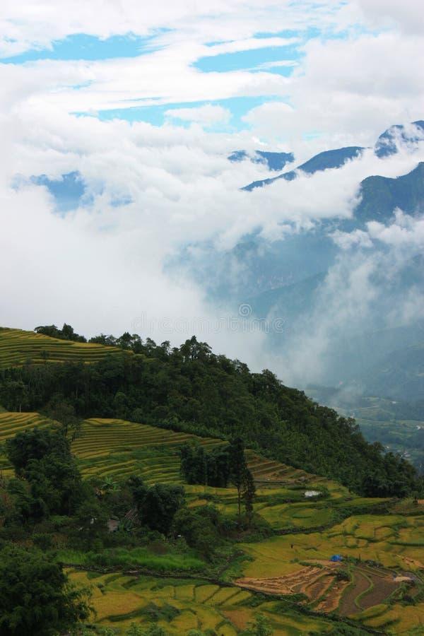 乡下在越南 库存照片